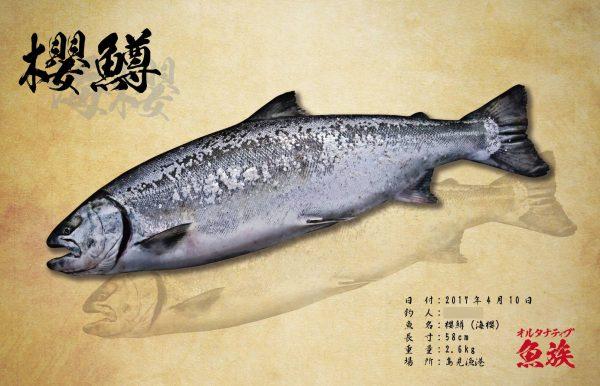 櫻鱒の影が海櫻になるようなイメージ!
