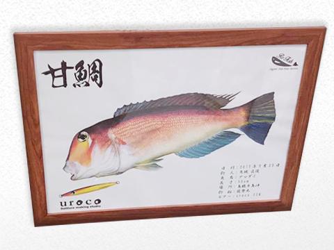 美濃和紙に印刷した甘鯛のカラーデジタル魚拓を木のフレームで掲示