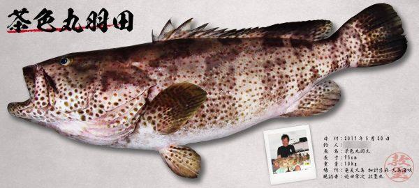 ハタ-デジタル魚拓