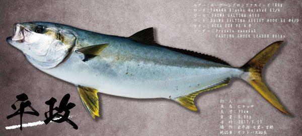 ヒラマサ魚拓
