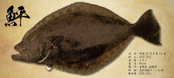 鮃デジタル魚拓