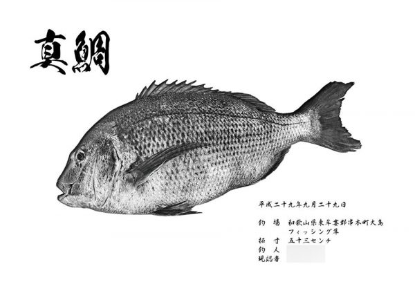 真鯛和紙魚拓